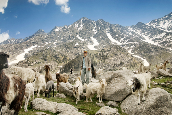 himalayan_goat_herder