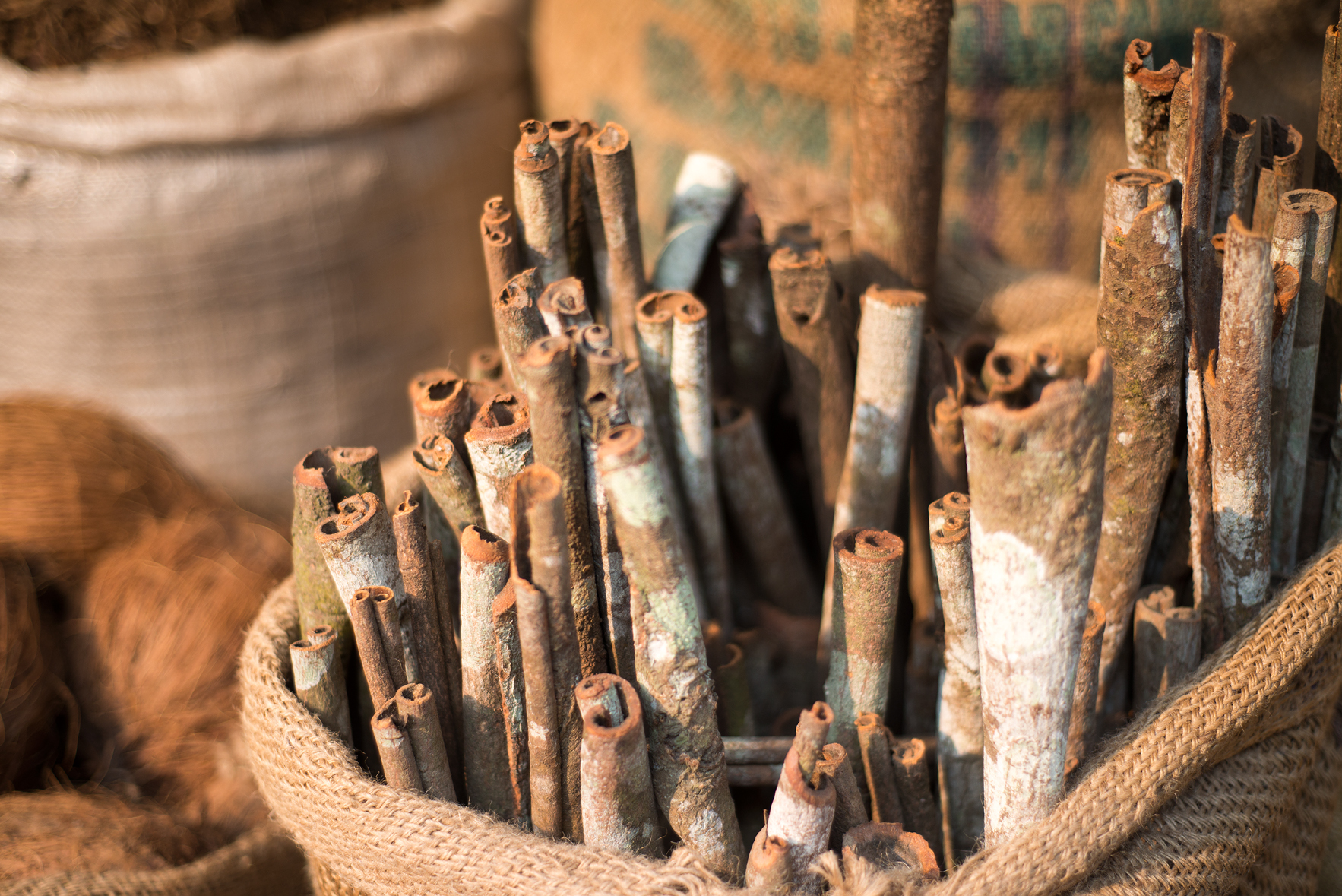 delhi india spices wholesale bags of cinnamon